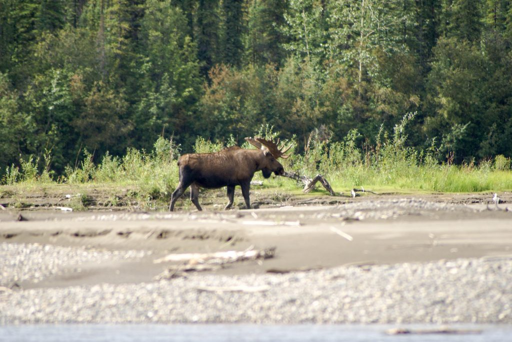 Beaver River: Explore Secret Waterways - Moose