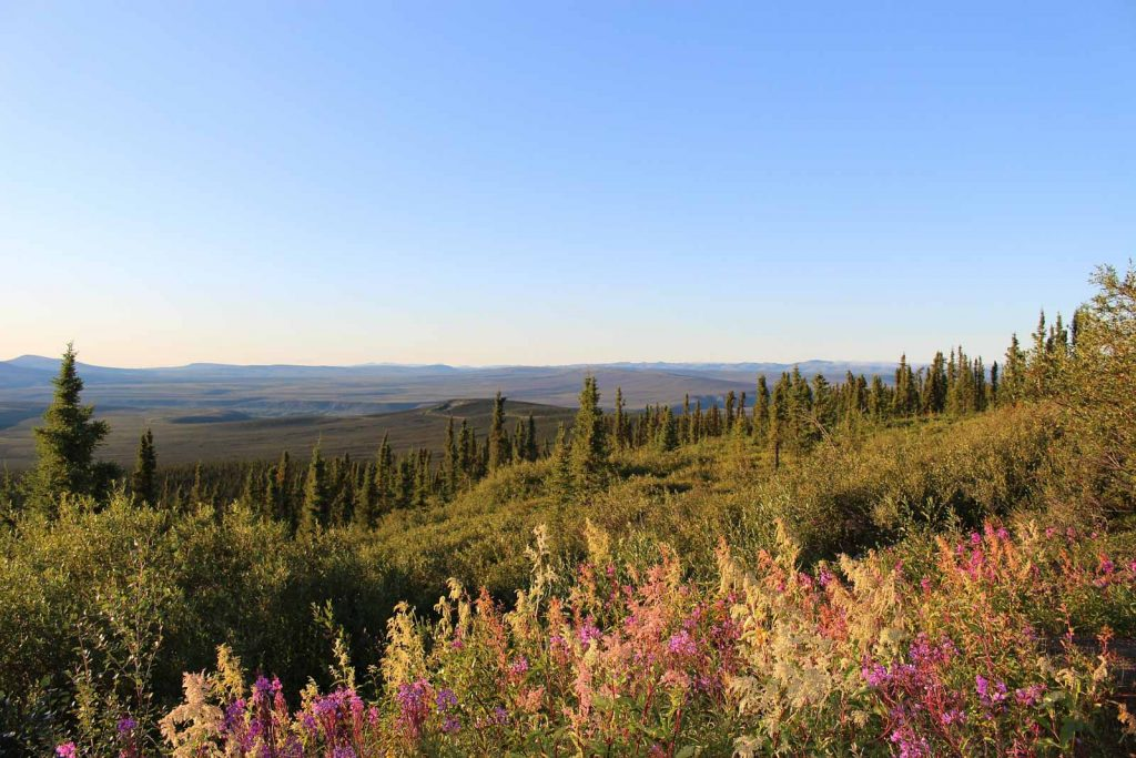 Go Wild: From the Rockies to Alaska - Landscape Dempster Highway