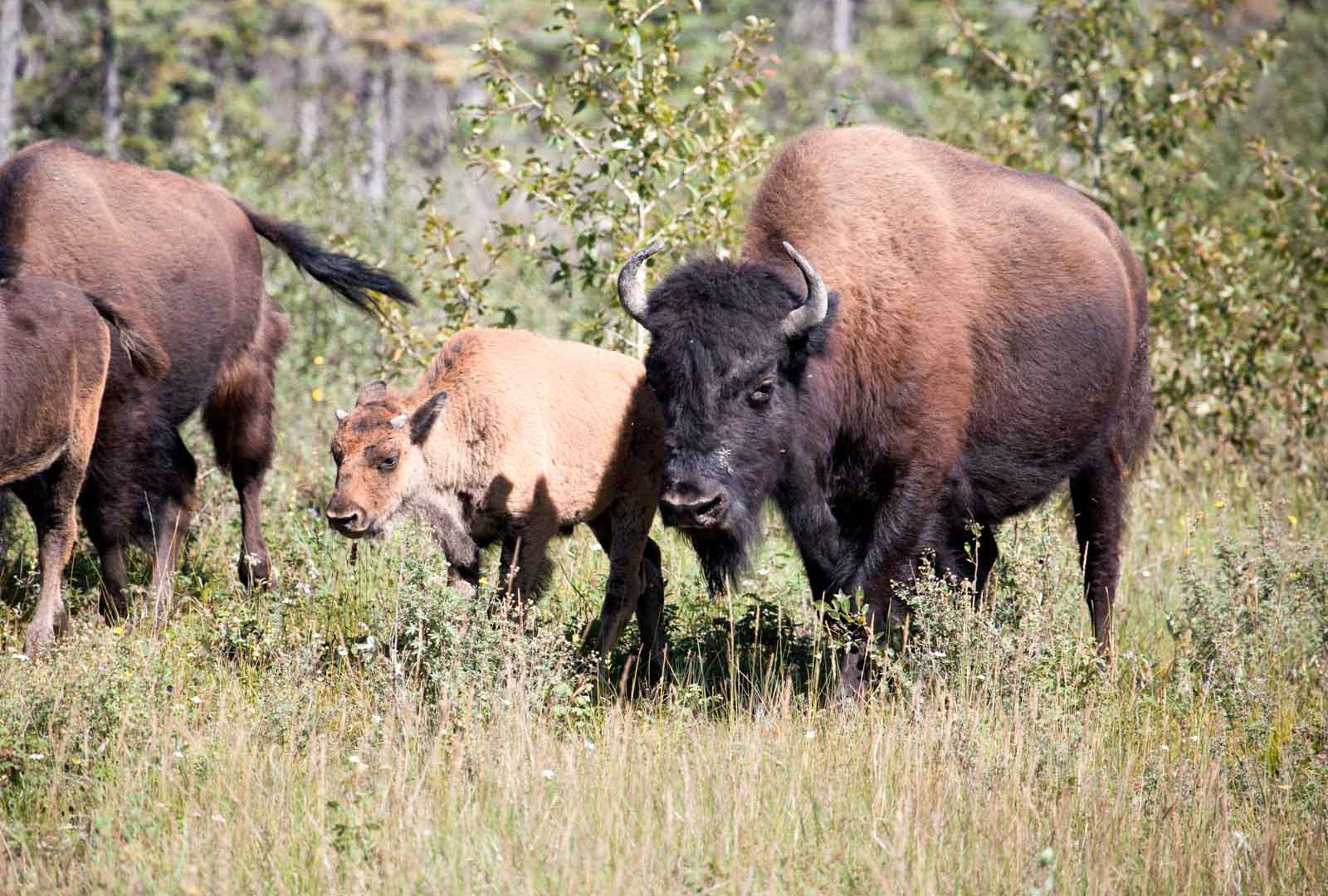 Discover Yukon & Northwest Territories